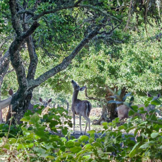 photo_creature_deer