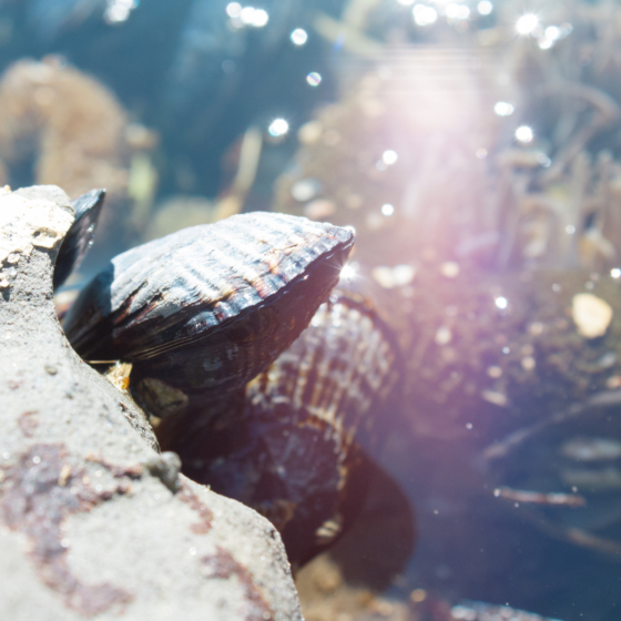 photo_creature_mussles