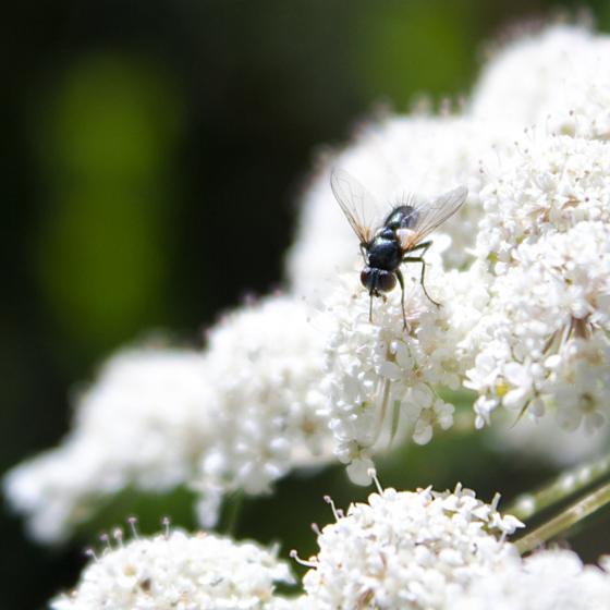 photo_creaturefly