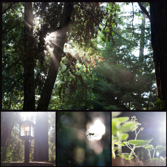 photo_moodboard_forest3