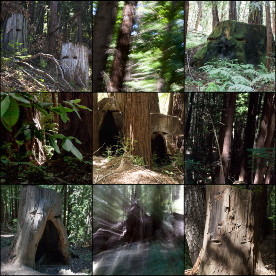 photo_moodboard_forest4